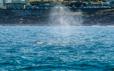 gray whale: Blow Hole of Gray Whale in Depoe Bay along Oregon coast