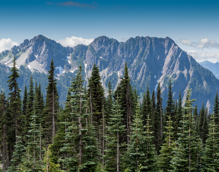 Evergreens and Mountains in Mount Rainier National Park