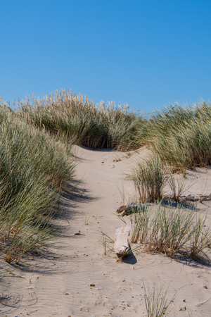Path Over Dunes to Pacific Coast with blue sky above