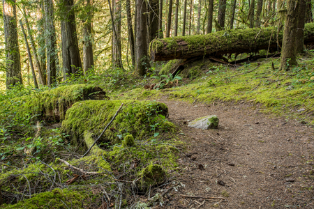 Trail Through Moss Covered Trees and Forest Floor Stock Photo