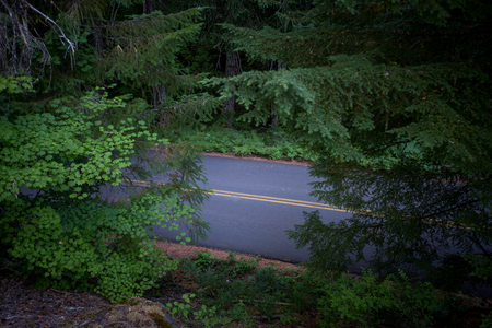 Road Cuts through Thick Oregon Forest in summer Stock Photo