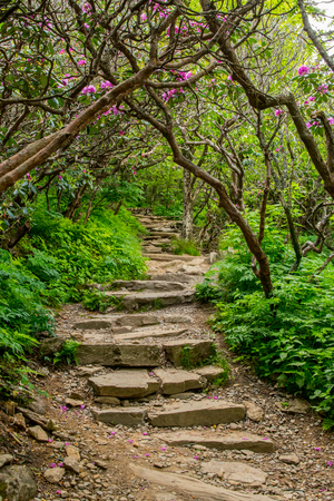 Stairs Through Rhododendron Bushes during early summer