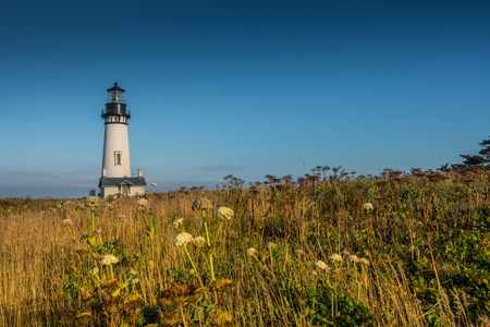 Yaquina Head Lighthouse Sits in Field of Wild Flowers along Oregon coast