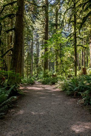 Wide Dirt Trail Through Mossy Forest on sunny afternoon Stock Photo