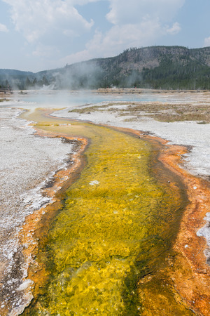 Yellow Sulfur Stream Flows from Steaming Hot Spring in Yellowstone