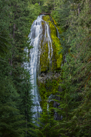 The Top of Proxy Falls Through Trees