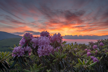 Sunset and Rhododendron Blooms along the border of North Carolina and Tennessee