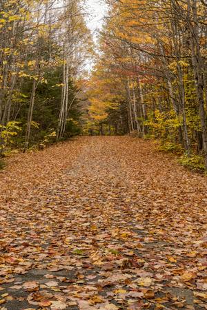 Leaves Covering Carriage Road Vertical in Acadia 写真素材