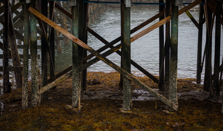 Barnicle Covered Posts of Dock at Low Tide on foggy afternoon Stock Photo