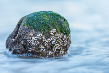Water Washes Over Small Rock Along Beach