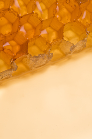 Edge of Honey Comb at Angle on cream background 스톡 콘텐츠