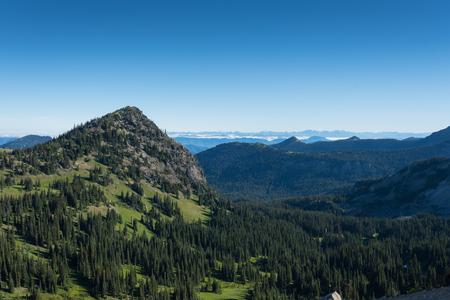 Green Meadows of Summer in Mount Rainier National Park