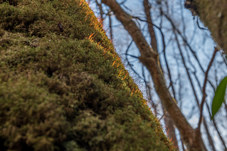 Moss Warmed by Morning Sun in early spring forest Stock Photo