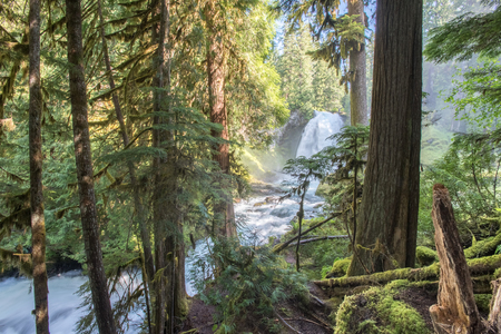 Sahalie Falls Through Mossy Forest in Oregon Wilderness