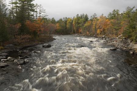 White Water Rushes Through the Penobscot River during the autumn season