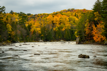 Autumn Colors Brighten up the Shore of the Penobscot River