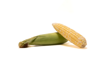 Two Ears of Corn on White Bcakground