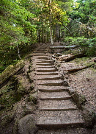 Stairs Cut Through Oregon Forest in lush summer forest