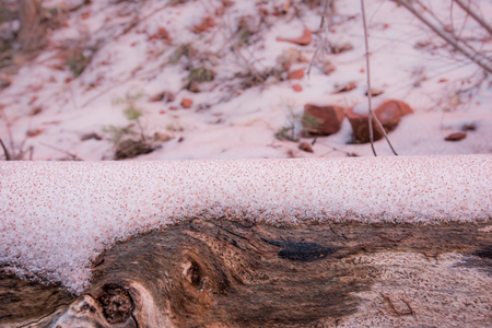Red Sediment Settles on Snowy Log in front of snowy terrain