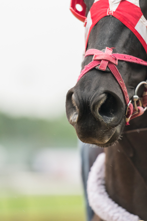 Nose of Horse with Copy Space to left