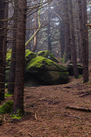 Mossy Boulders in Sparse Forest on foggy summer day Stock Photo