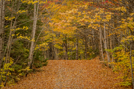 Leaves Cover Narrow Road Through Forest in Autumn Leaf Peeping Season