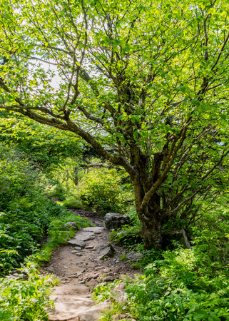 Green Foliage in Summer in the Smoky Mountains Stock Photo