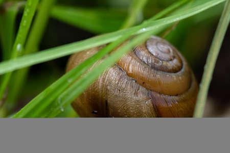 Snail Shell Behind Grass in Summer