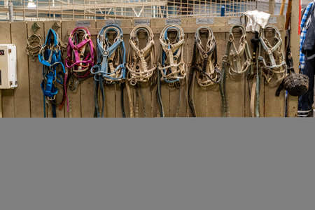 Selection of Bridles on Wall in horse barn