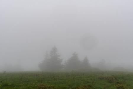 Pine Trees Lurk in the Fog across field in summer Stock Photo