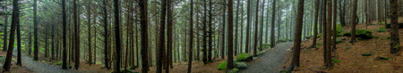 Panorama of Eerie Forest Trail on misty day