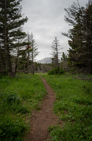 Dirt Trail Heads Uphill on Overcast Day in Montana wilderness