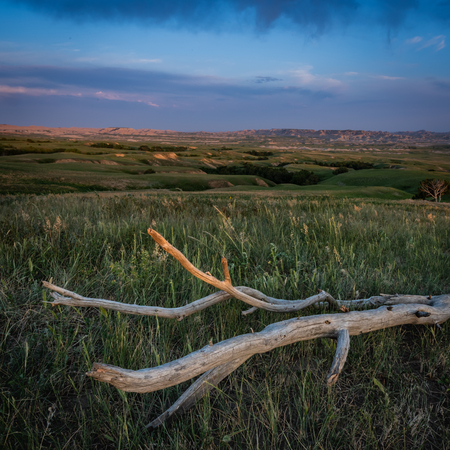 Dead Wood Sits in Prairie with Badlands in background Stock Photo