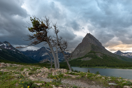 Gnarly Tree Overlooks Swiftcurrent Lake on stormy day