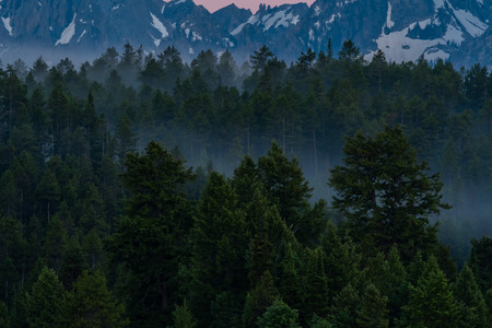 Last Fog Of The Morning hovers in trees at the base of the Teton mountains Stock Photo