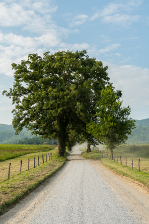 Large Trees Stand Along A Dusty Hyatt Lane in Cades Cove Stock Photo