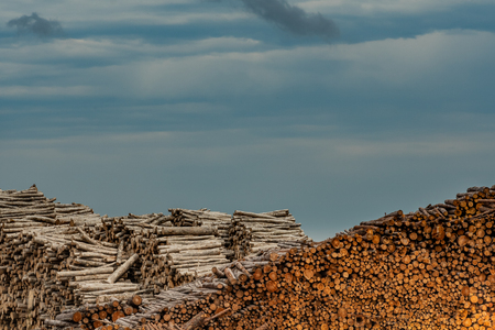 Layers of logged Wood in Large Heaps on cloudy day
