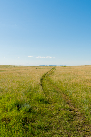 El sendero del bosque petrificado cruza la pradera en Dakota del Norte Foto de archivo