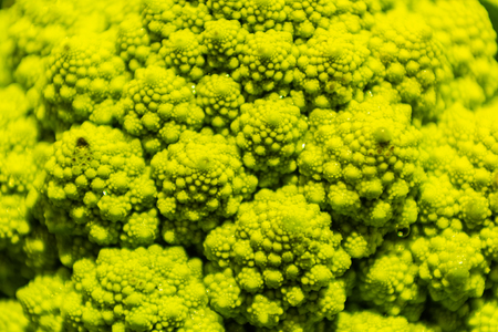 Romanesco Fractle Patterns close up for a background image