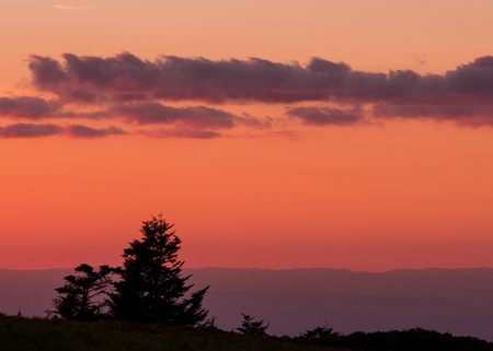 Gnarly Pine Trees with Pink Sunset dropping behind the Blue Ridge mountains