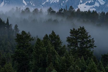 Fog Settles in Evergreen Forest at base of Tetons Banco de Imagens