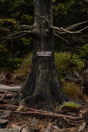 Ellen Creek Sign On Tree At The Beach