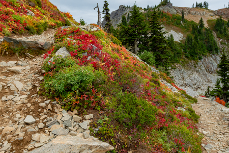 Fall Colors at a Switchback in the peaks around Mount Rainier Banco de Imagens