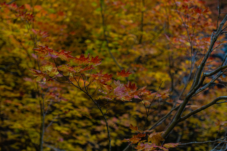 Detail of Brown Leaves in Fall Forest in Western Washington