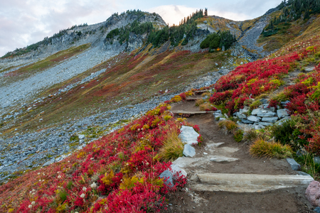 Huckleberry Bushes Turn Red Along Skyline Trail in Washington wilderness Banco de Imagens