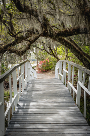White Bridge Crosses Under Spanish Moss on live oak tree