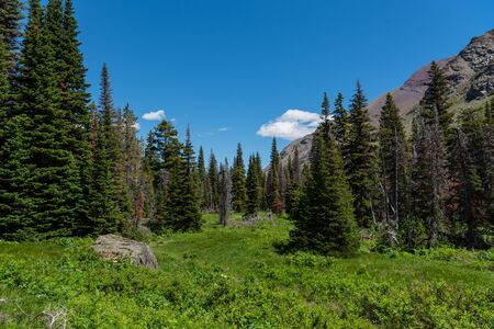Lush Valley in Montana Wilderness in Two Medicine Region 免版税图像