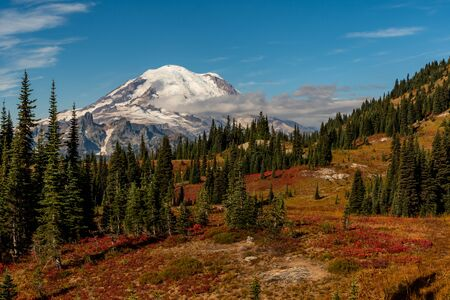 Mt. Rainier Looms Over Field and Trees in Autumn