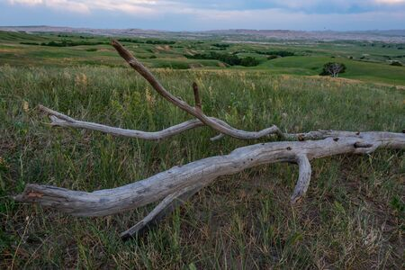 Piece of Dead Tree Trunk in Field with Badlands Behind at sunset Stok Fotoğraf