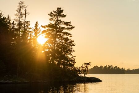 Sun Flares Through Pine Trees on Island in Rainy Lake